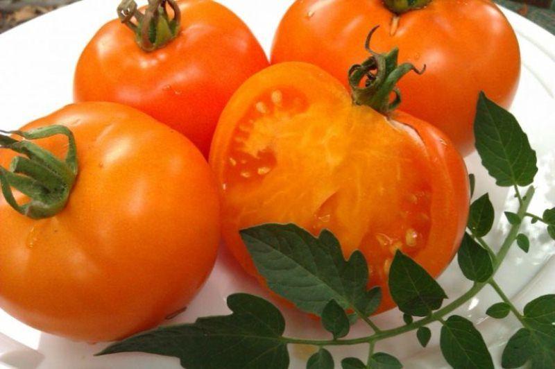 tomat-oranj